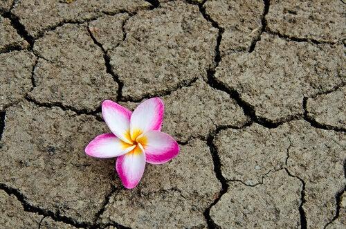 Jeg tror endelig jeg skjønner emosjonell intelligens - blomst i ørken