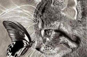 katt og summerfugl