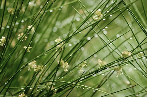 dugg pa gress