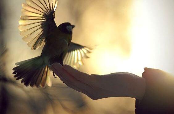 fugl i hand