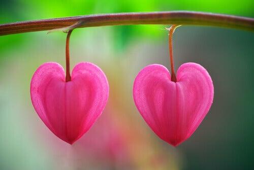Blomster i ørkenen: En leksjon i å gjenkjenne kjærlighet