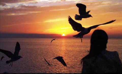 Kvinne og fugler solnedgang silhuett