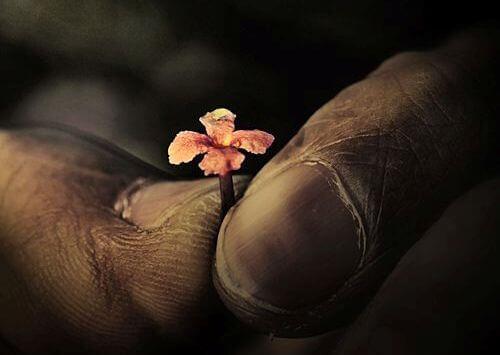 Hånd holder liten blomst