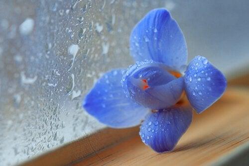 Å finne en avslutning for å begynne igjen - Blå blomst ved vindu