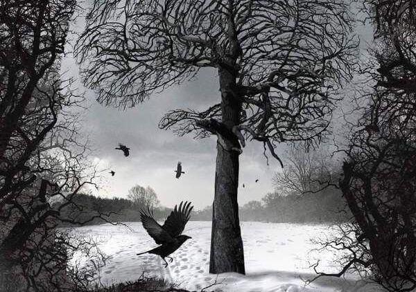 Mørkt tre, snø og fugler
