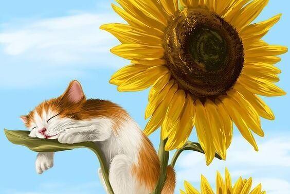 Katt sover på et solsikkeblad