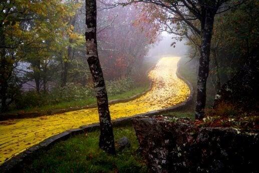 Gul vei i en skog