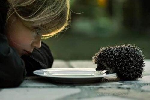 Vennlighet er bra for hjernen: Barn ser på pinnsvin som drikker