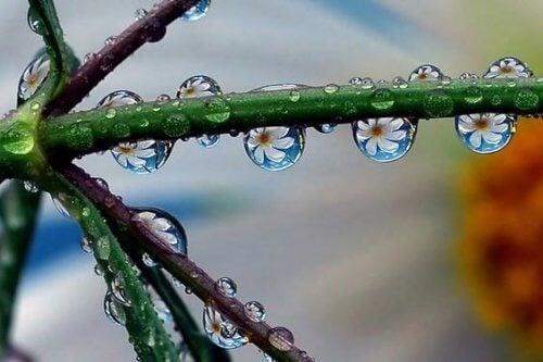 Dråper reflekterer blomst