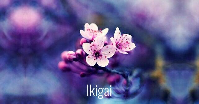 Ikigai-blomster