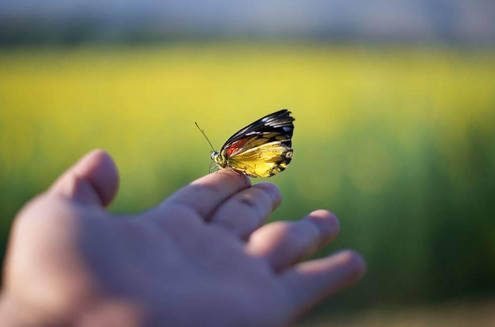 Sommerfugl sitter på hånd
