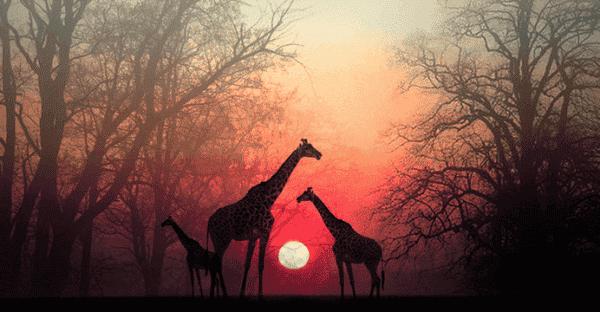 Ta et øyeblikk for å la sjelen din nå deg igjen: en vakker afrikansk historie