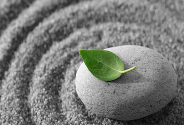 et grønt blad på en liten stein