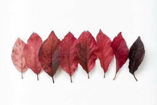 blader på rad, av forskjellige farger