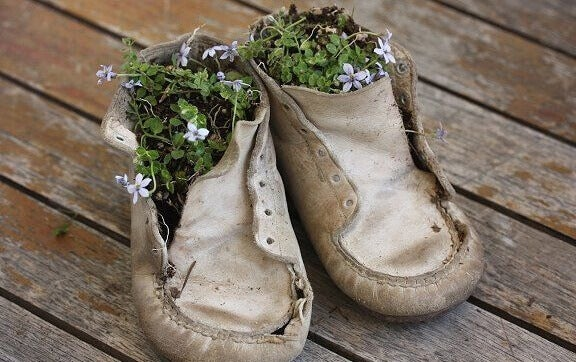 Blomster vokser i et par barnesko