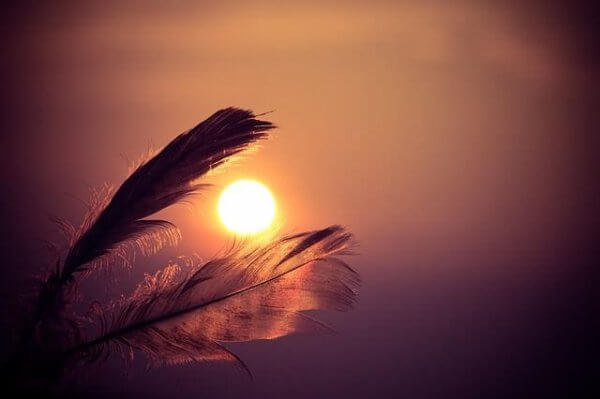 Fjær i solnedgang