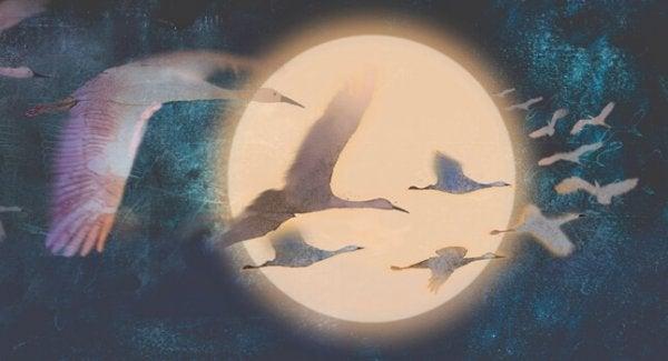 fugler som flyr i natthimmelen