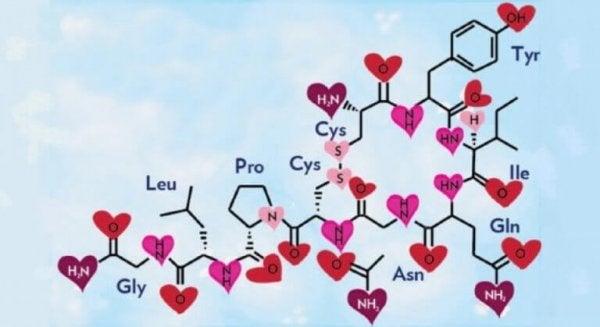 oksytocin, kjærlighetens kjemi