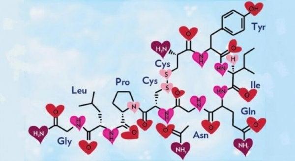Kjærlighetshormonet, oksytocin