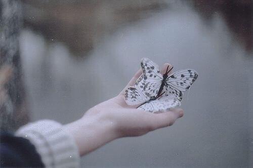 Sommerfugler i hånd