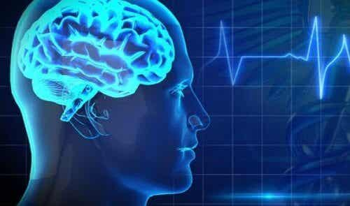 5 av de verste matvarene for hjernen din