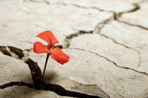 en blomst som sprer seg gjennom en sprekk i bakken
