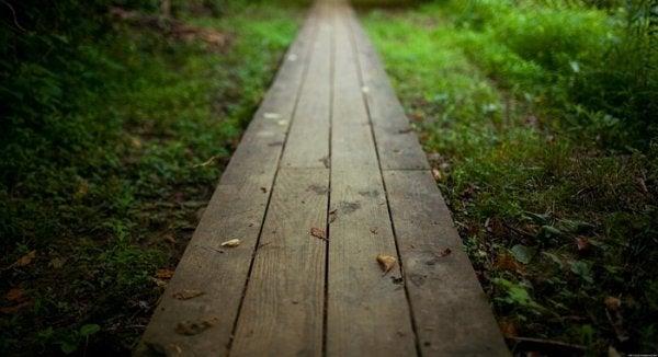 En sti i skogen