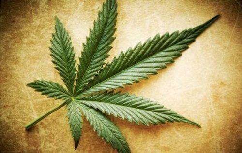 Myter, sannheter og halvsannheter om cannabis