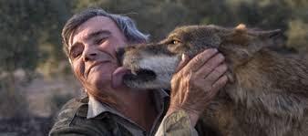 Mann og ulv