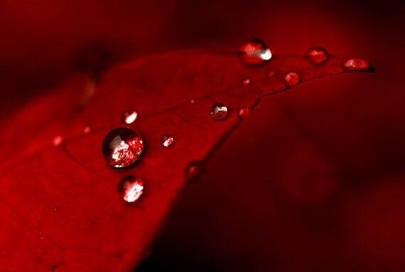 Rødt blad med vanndråper