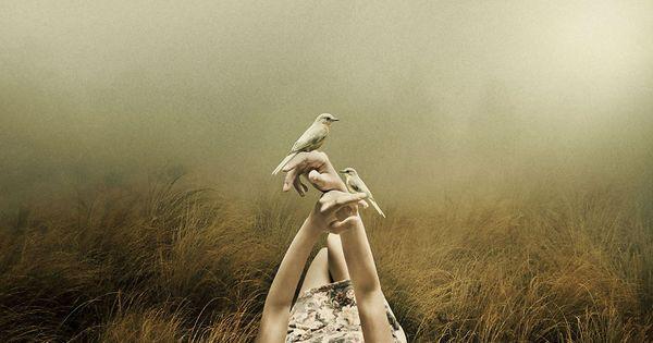Hender som holder hvite fugler
