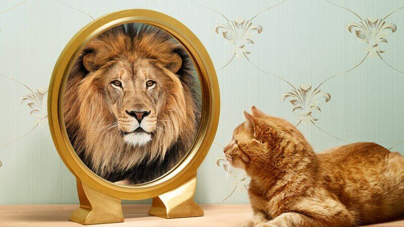 Katt ser løve i speilet