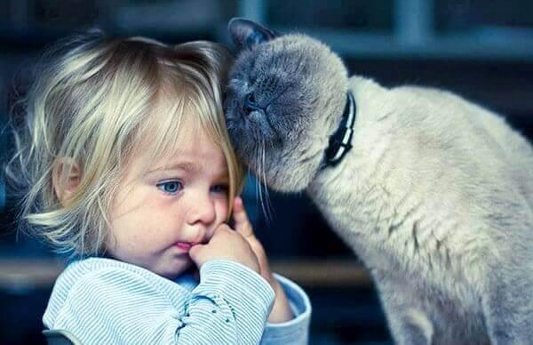 Katteterapi: 5 fordeler med å leve med katter