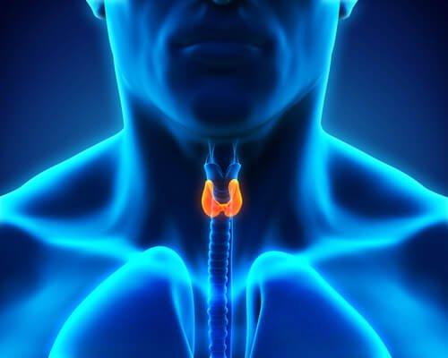Hva skjer i kroppen din når du har skjoldkjertelproblemer?