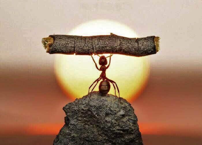 Utholdenhet: styrken til en maur