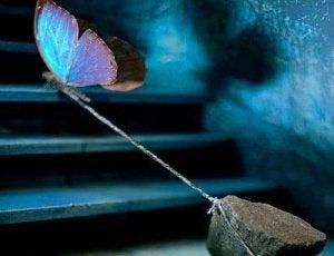 En sommerfugl som trekker en stein