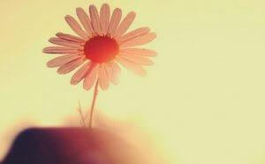 Blomster i sollys