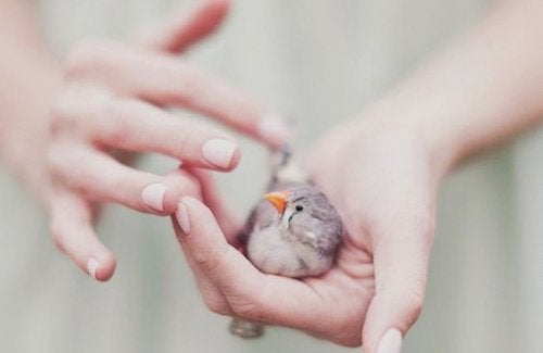 Fugl i hånd