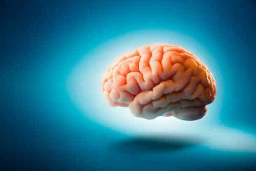 5 hjernemyter du trodde var sanne