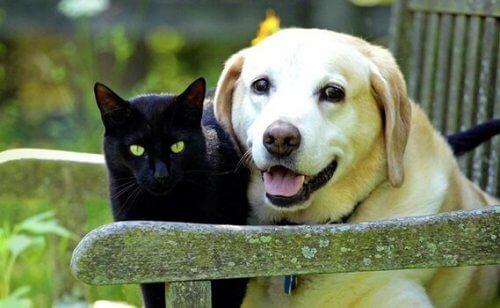Sorg over et kjæledyr: Tapet av en firbeint venn