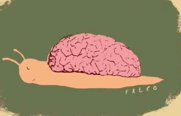 Snegle med hjerne som skall