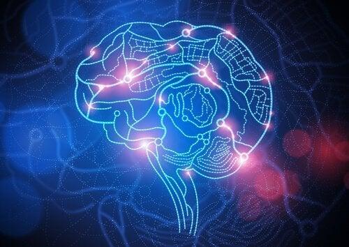 En aktivert hjerne.