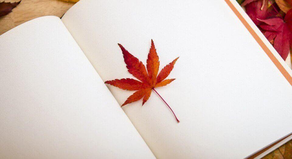 Et blad i en bok