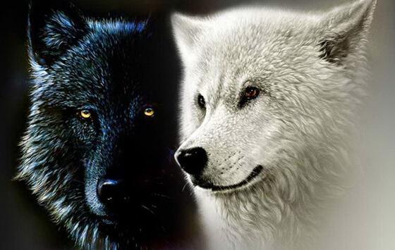 Cherokee-legenden om de to ulvene, eller våre indre krefter