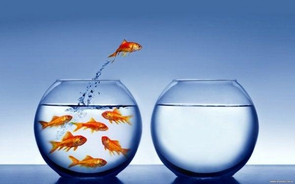 fisk hopper ut av vannet