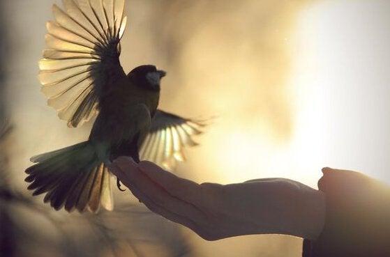 en fugl som flakser med vingene sine mens en hånd holder ham