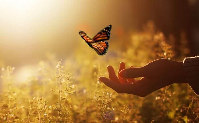 En sommerfugl i hånden