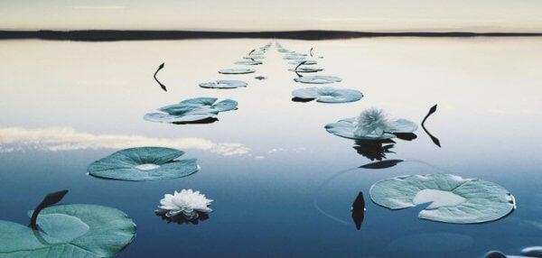 En sti av vannliljer