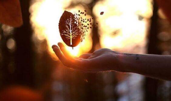 Hånd med et blad
