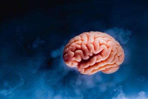 Hjernetsunami: Hva skjer i hjernen din før du dør?